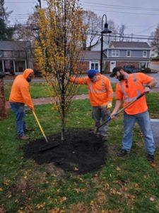 2020 Fall Tree Planting